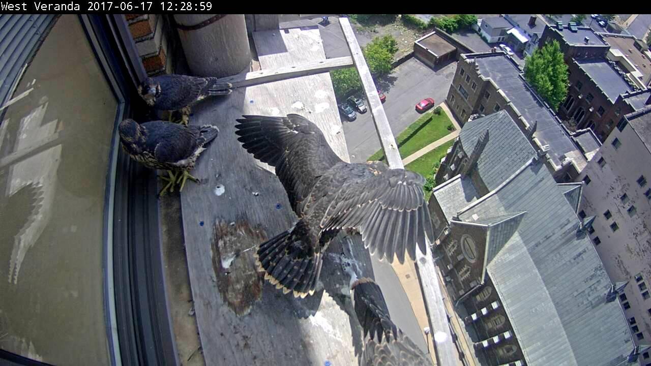 Stretching wings on the veranda