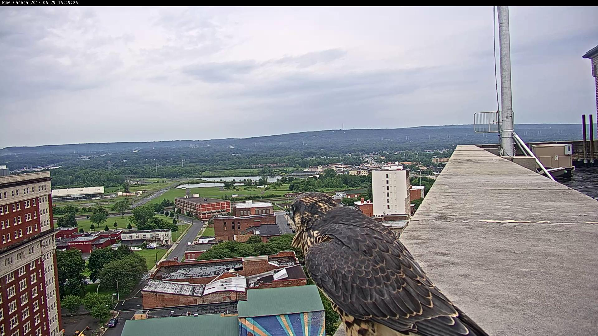 We love it when they perch near our PTZ camera