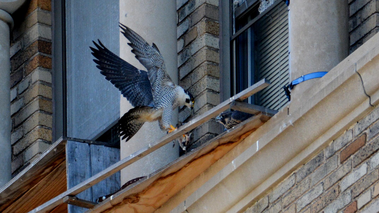 Ares brings food to the veranda