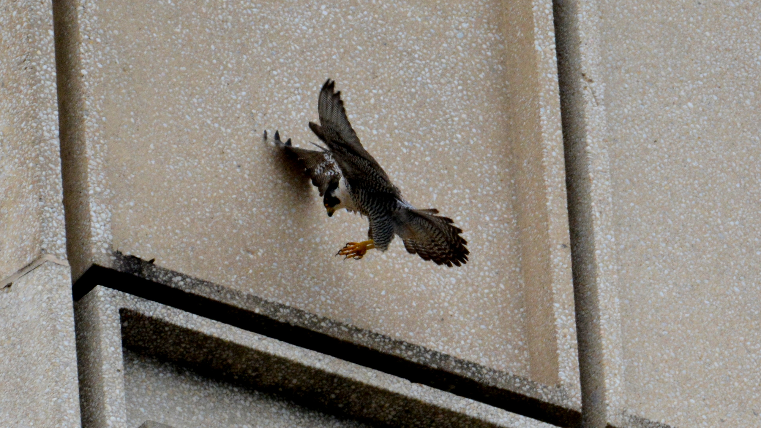 coming in for a landing on the State Building