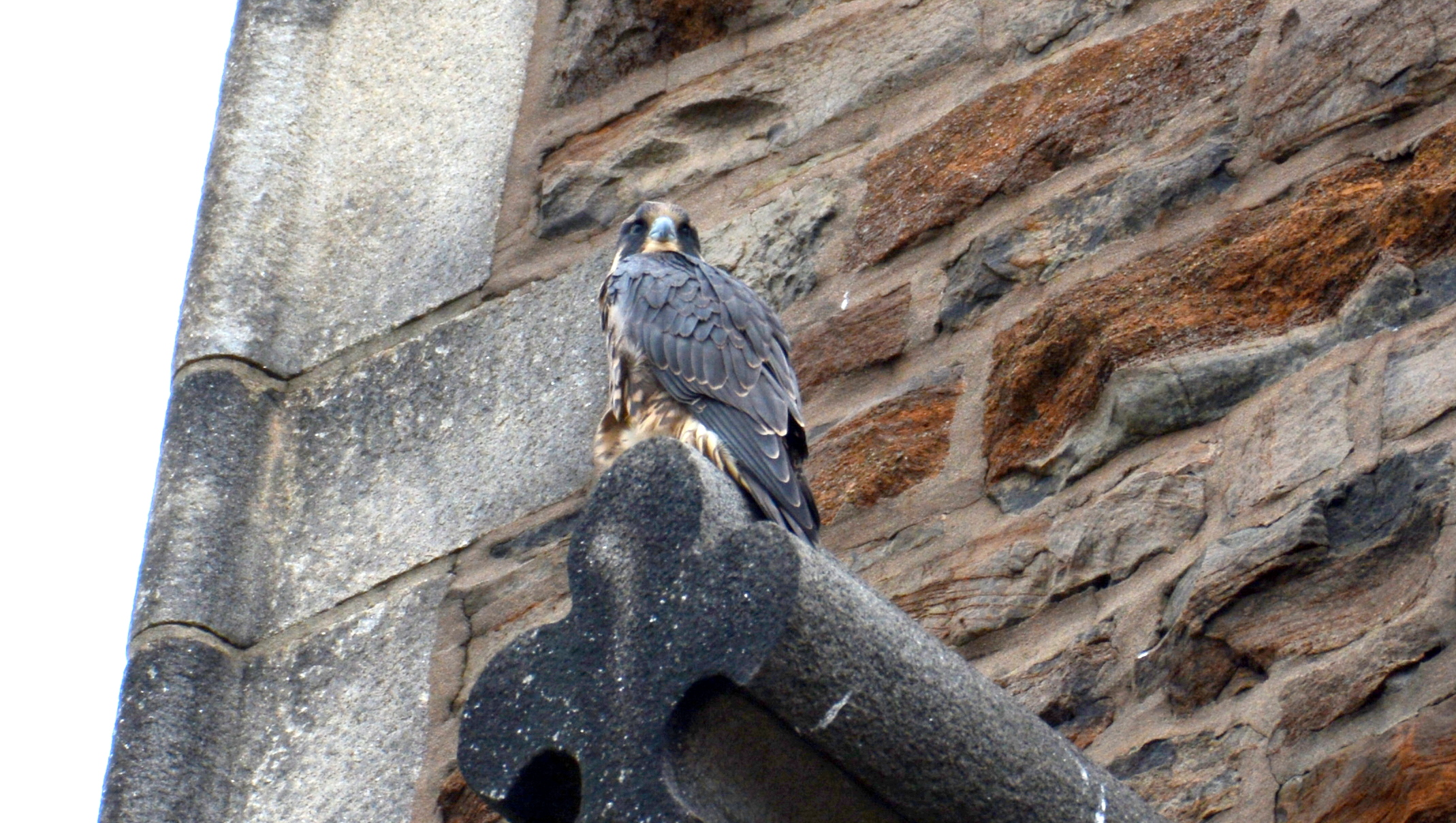 Perched on the lower steeple ledge