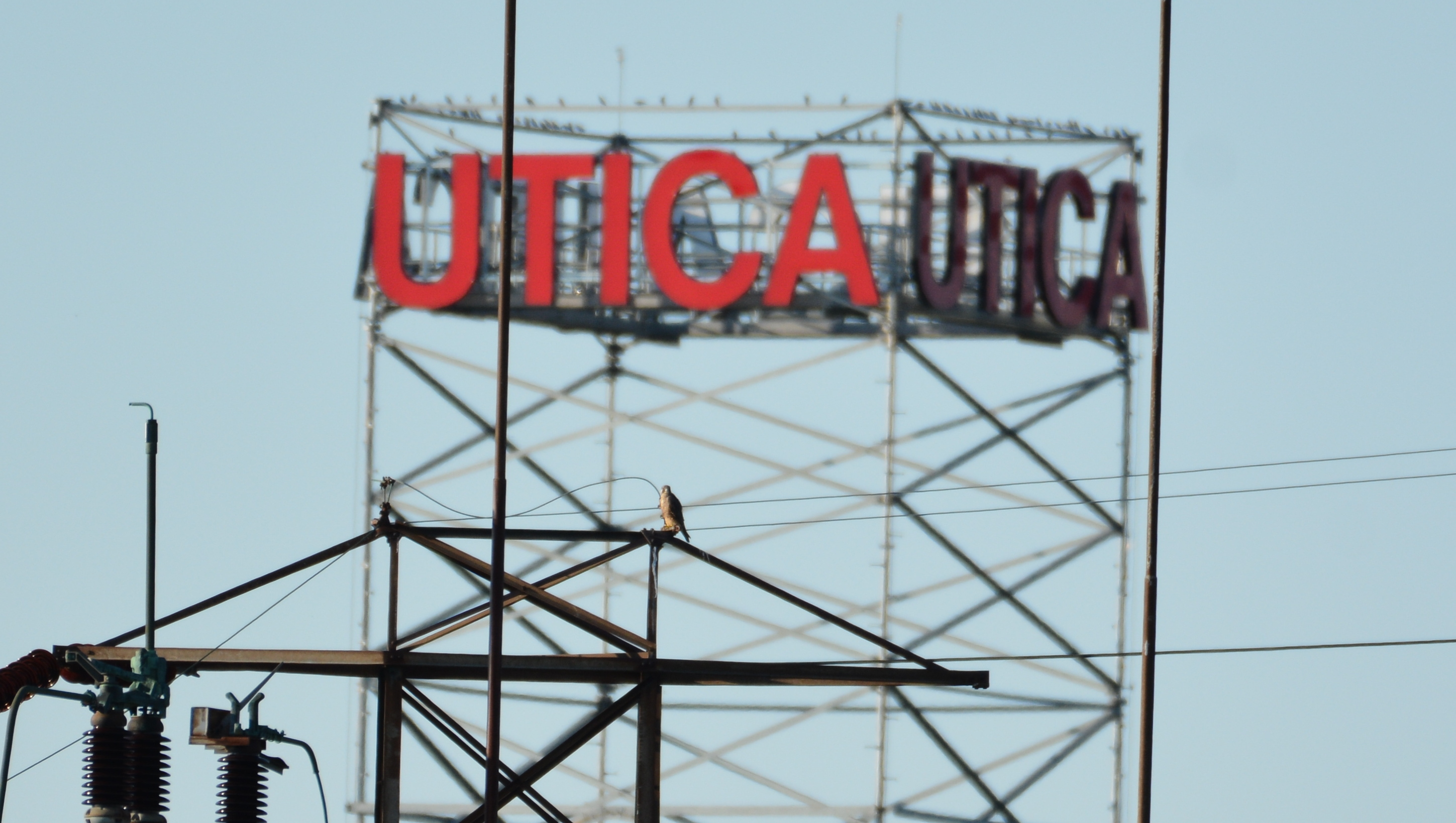 Perching on a tower with the Utica sign in the backround