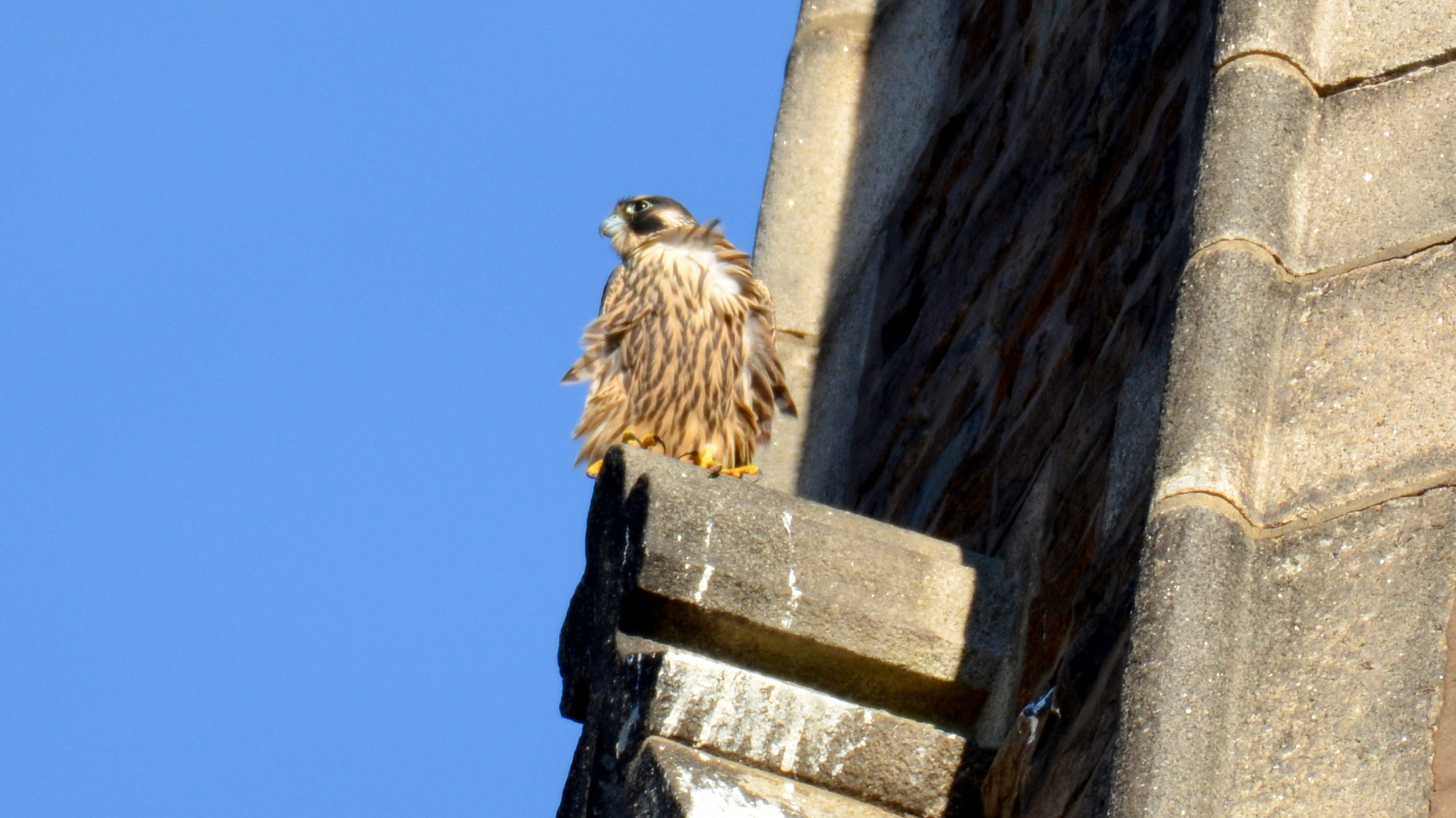 Perching on the steeple