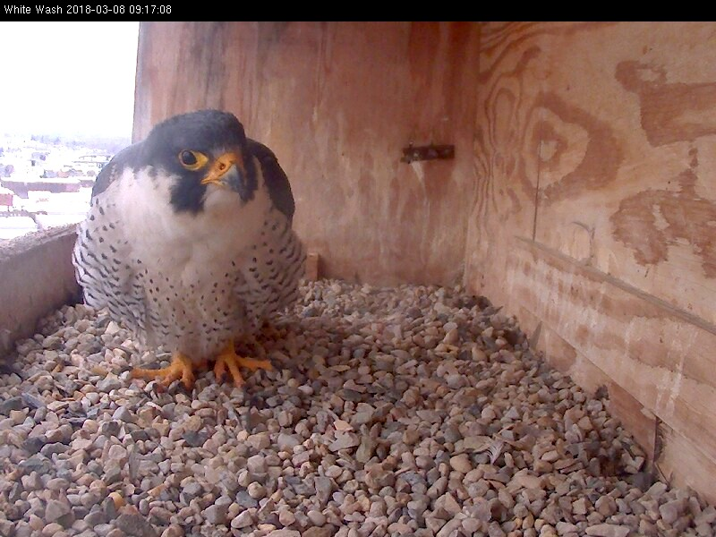 Ares at the nest box
