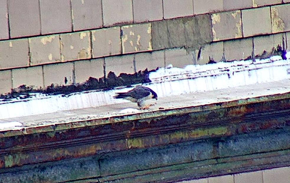 Astrid on the hotel ledge