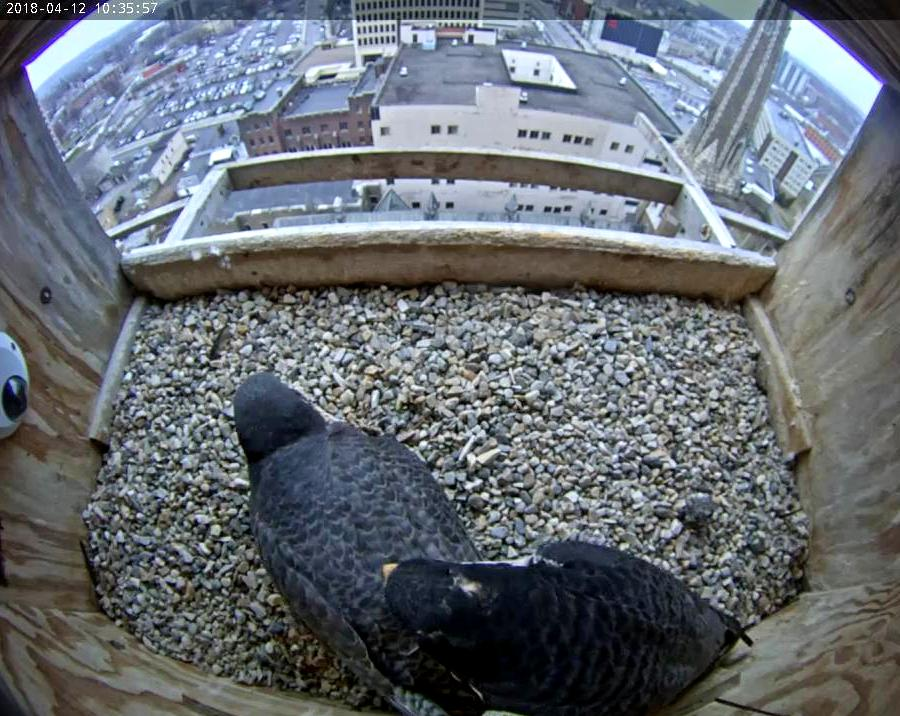 Ares compels Astrid to leave the nest
