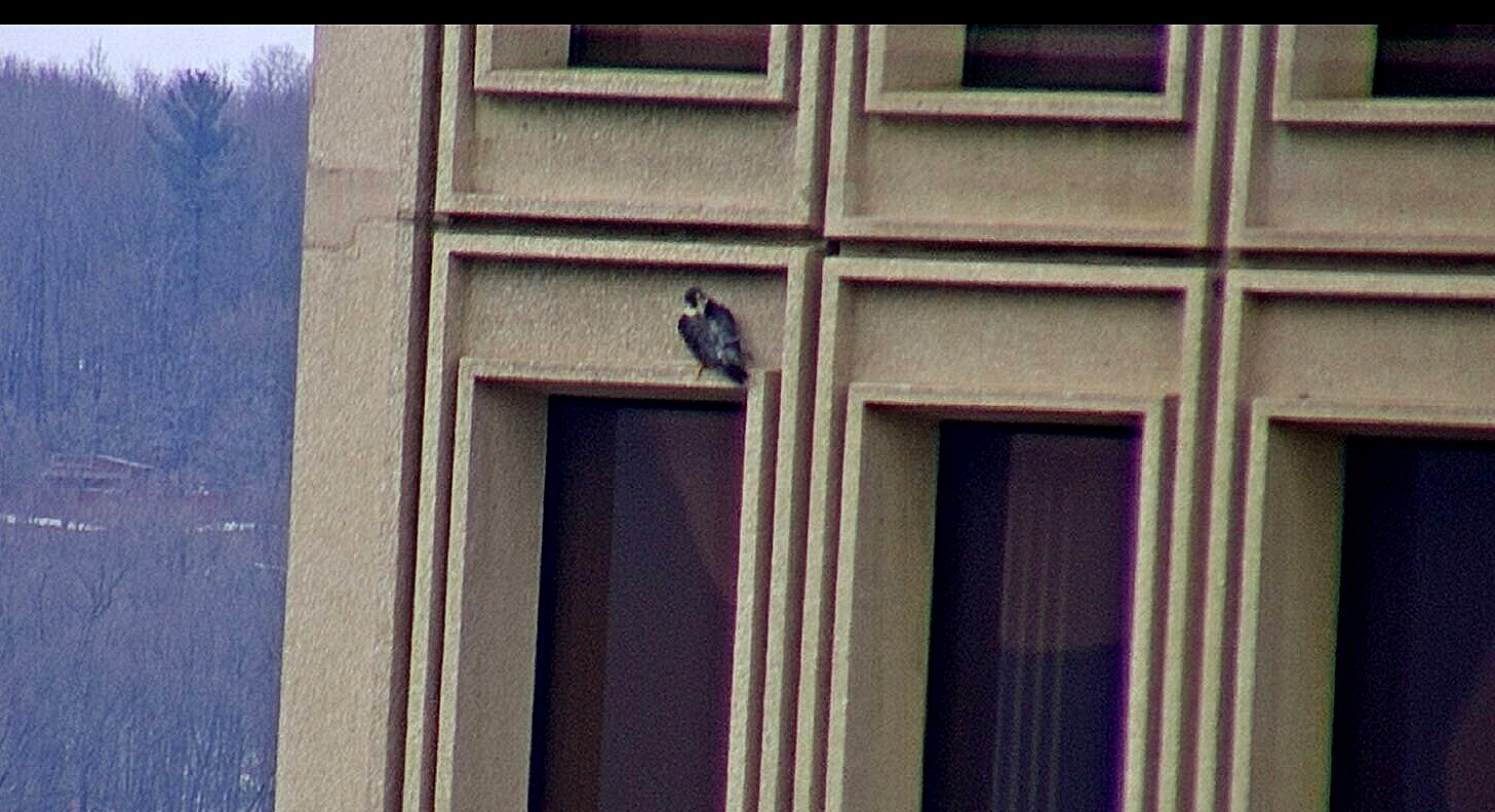 Astrid perched on the State Building